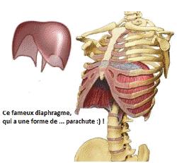 schéma diaphragme